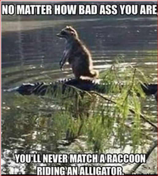 Gator and Coon